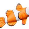 Ryba Nemo